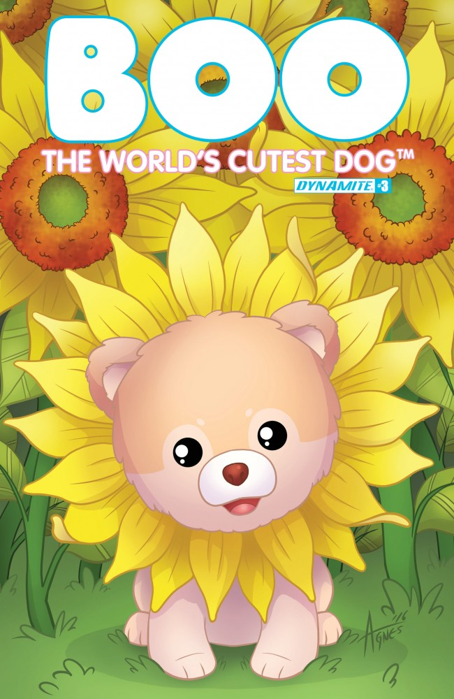 Download Boo, The World's Cutest Dog #3